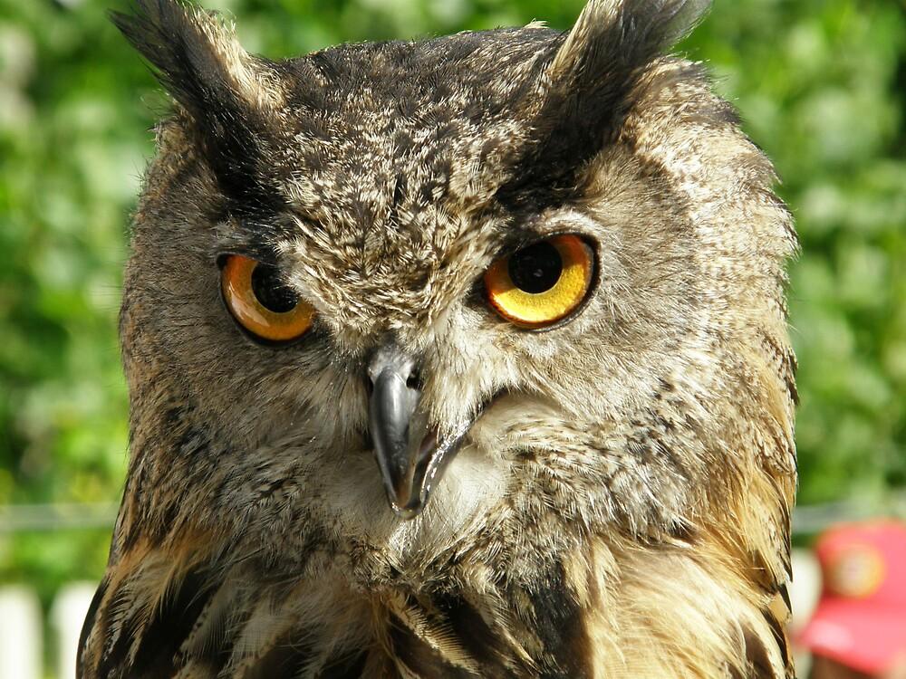 What big eyes you have! by Marina Ribeiro