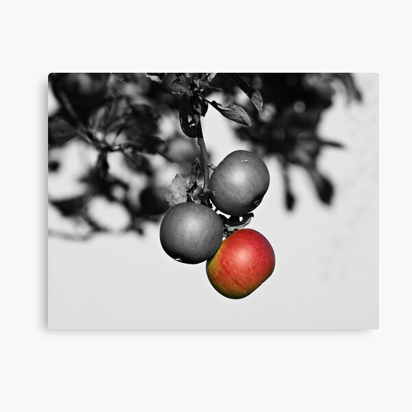 Apple a Day Keeps the Doctor Away Canvas Print