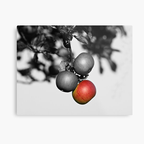 Apple a Day Keeps the Doctor Away Metal Print