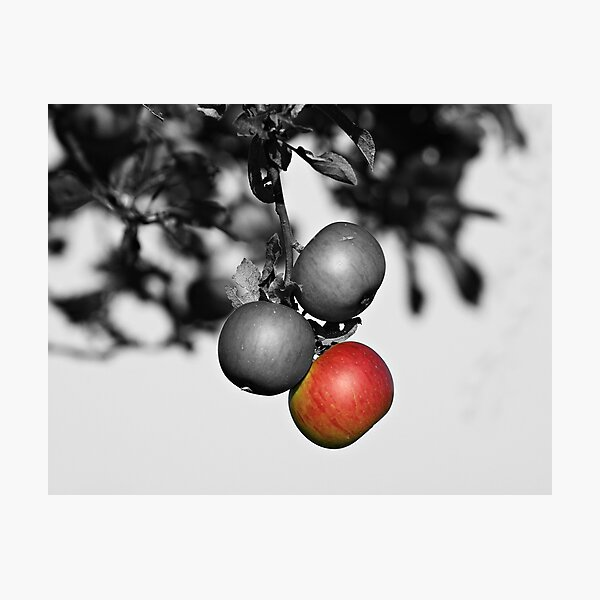 Apple a Day Keeps the Doctor Away Photographic Print