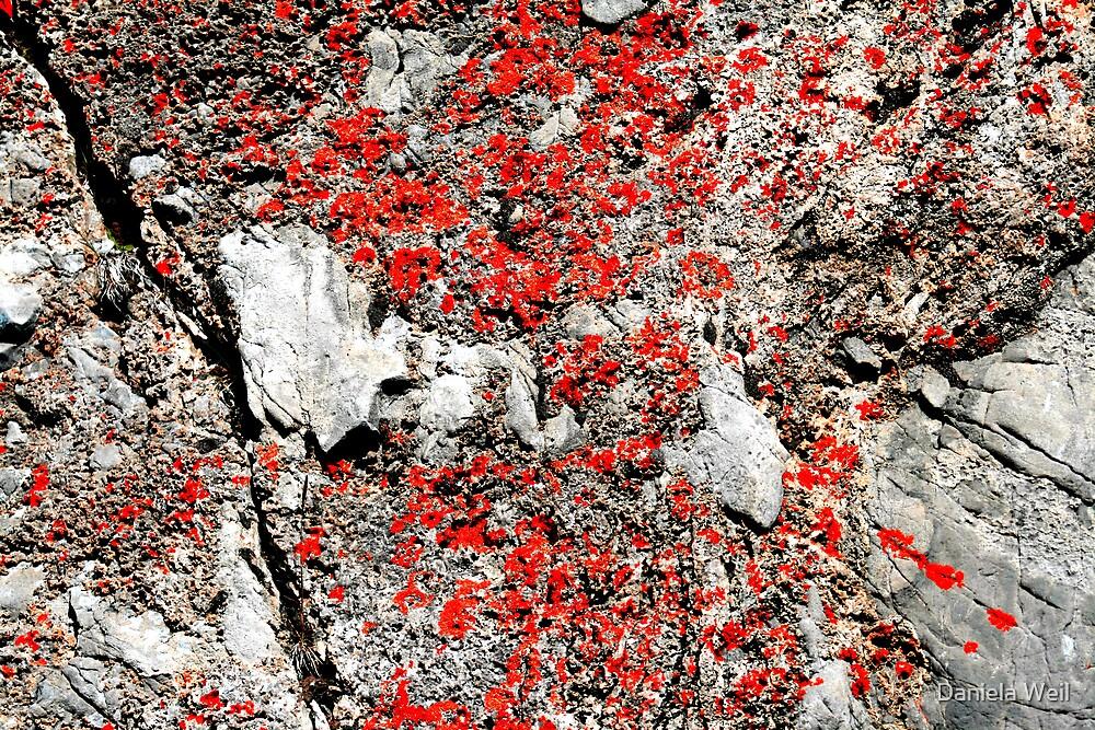 Sulphur Mountain, Detail by Daniela Weil