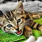 Meowwwww by Jamie Lee