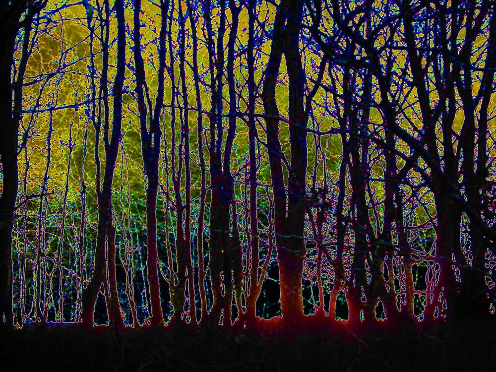 Forest Glow by wysiwyg