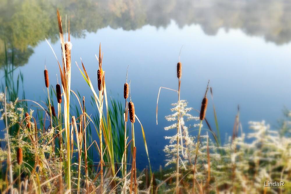 September Morning... by LindaR