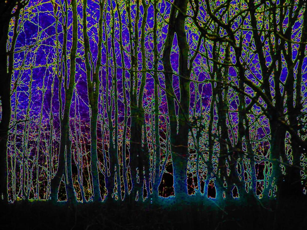 Forest Glow 2 by wysiwyg