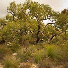 Todtiana Tree by Werner Padarin
