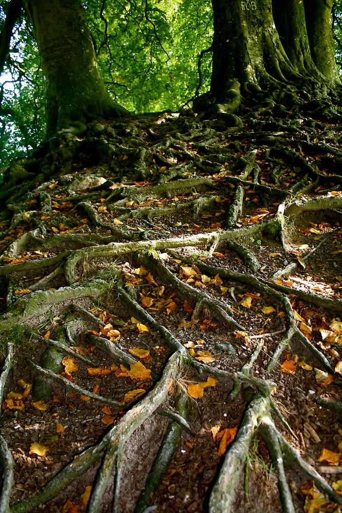 Rooted 4 by Amanda Gazidis