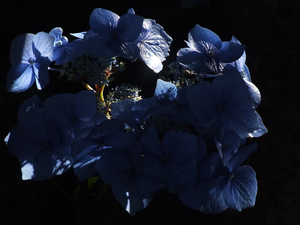 Feeling Blue by Boyd Miller