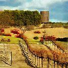 Temecula Wine Country by Rhonda Strickland