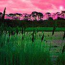 Through the Reeds by wysiwyg