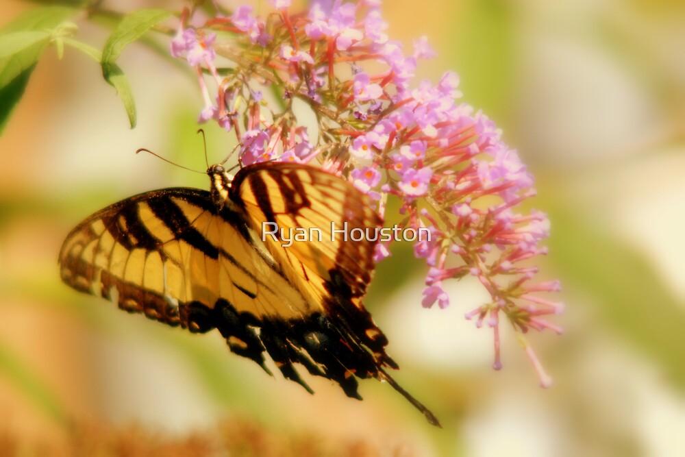Garden Butterfly by Ryan Houston