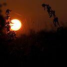 Daybreak by Stephen faulkner