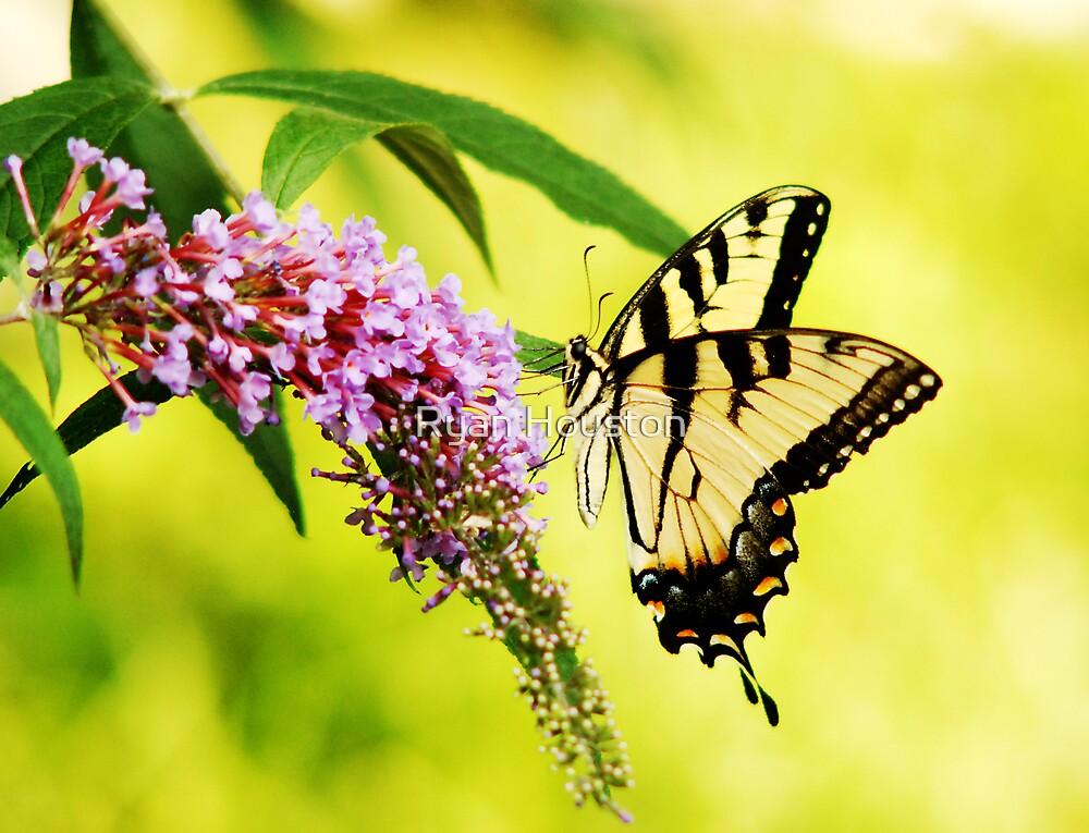 Swallowtail Butterfly by Ryan Houston