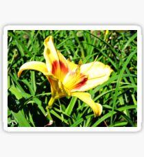 Yellow Flower in Grass Sticker
