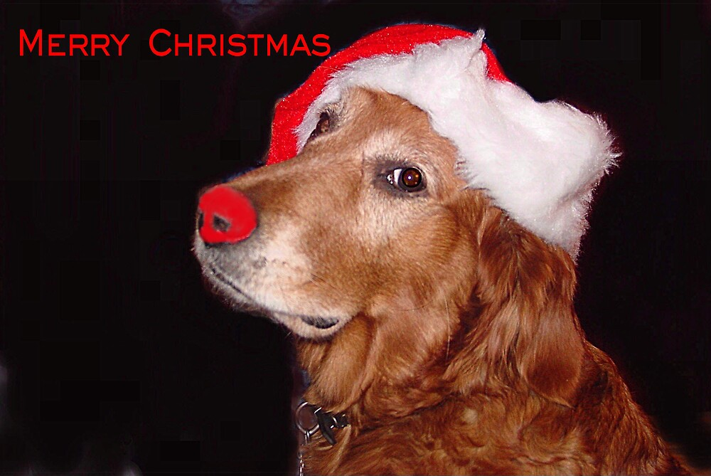 Christmas Greetings from a Golden Retriever by Liz Wear