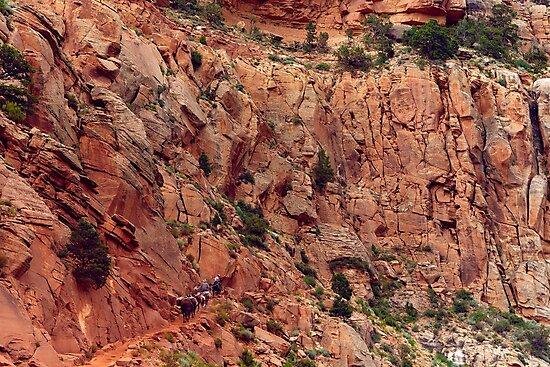 Travel West - Arizona by mwesselcreative