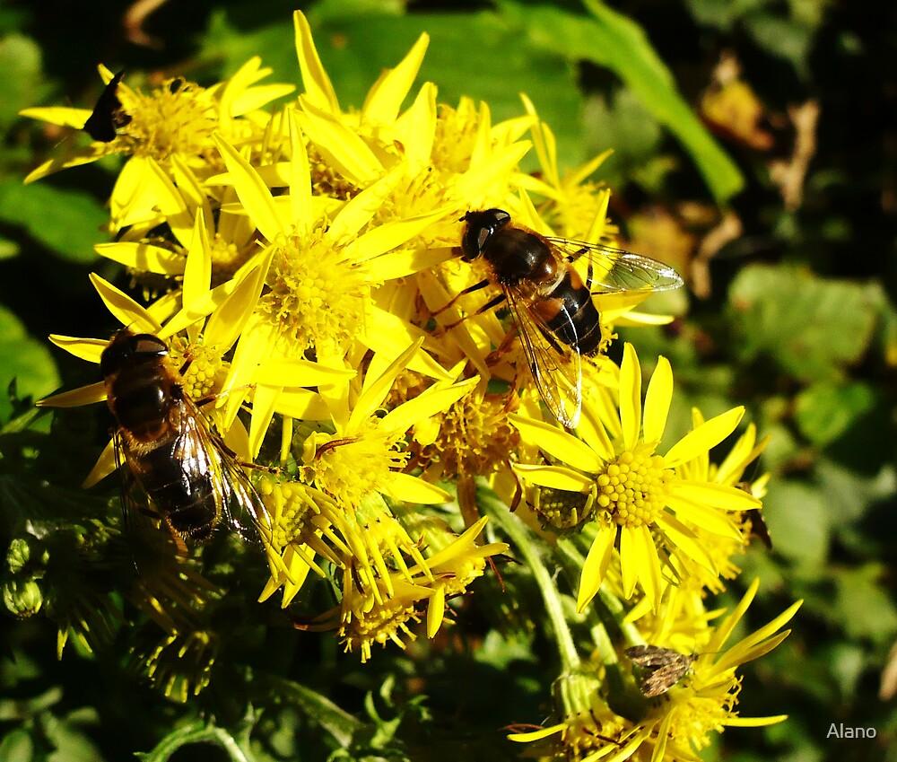 Buzy Bees by Alano