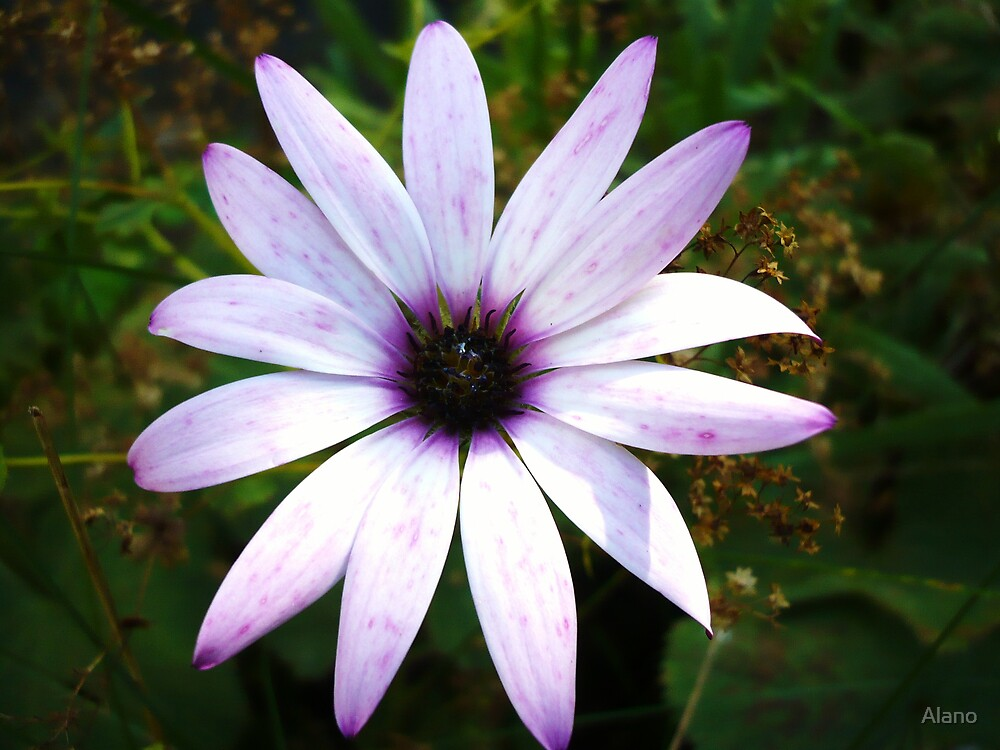 Flower by Alano