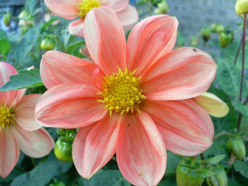 Seven Petals Of Pure Colour by 6719jason