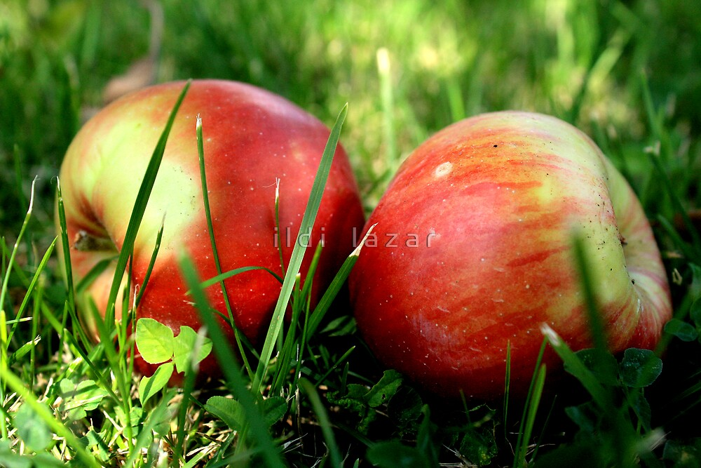 Apple couple by i l d i    l a z a r