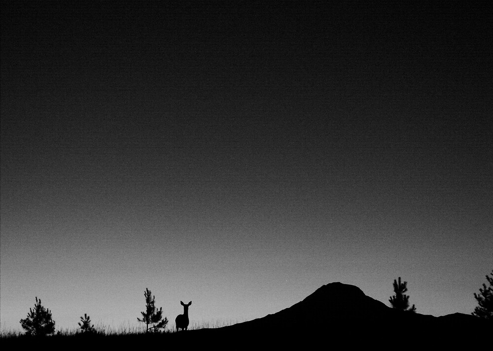 Nightline by Liza Carlson