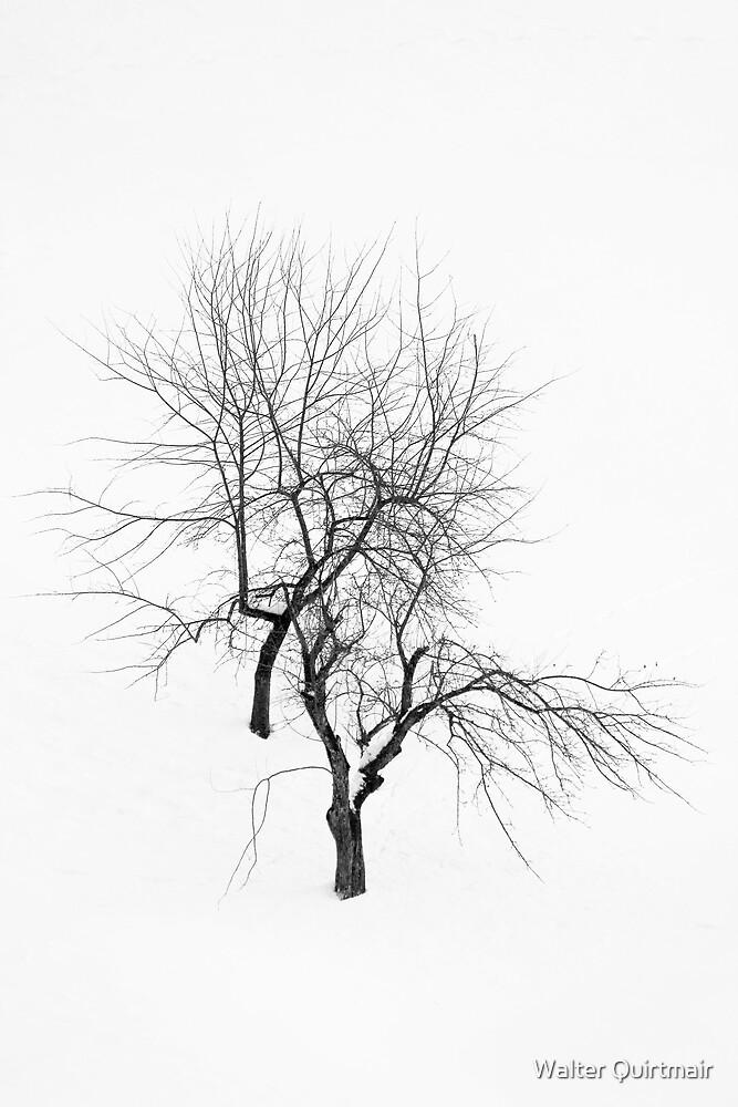 Hibernation by Walter Quirtmair