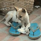 Flip-flop puppy by Denzil