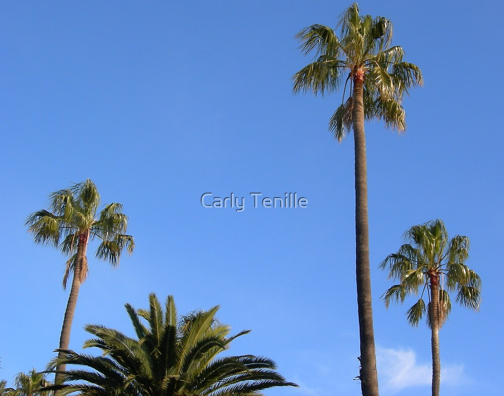 Palms of St Kilda by Carly Tenille