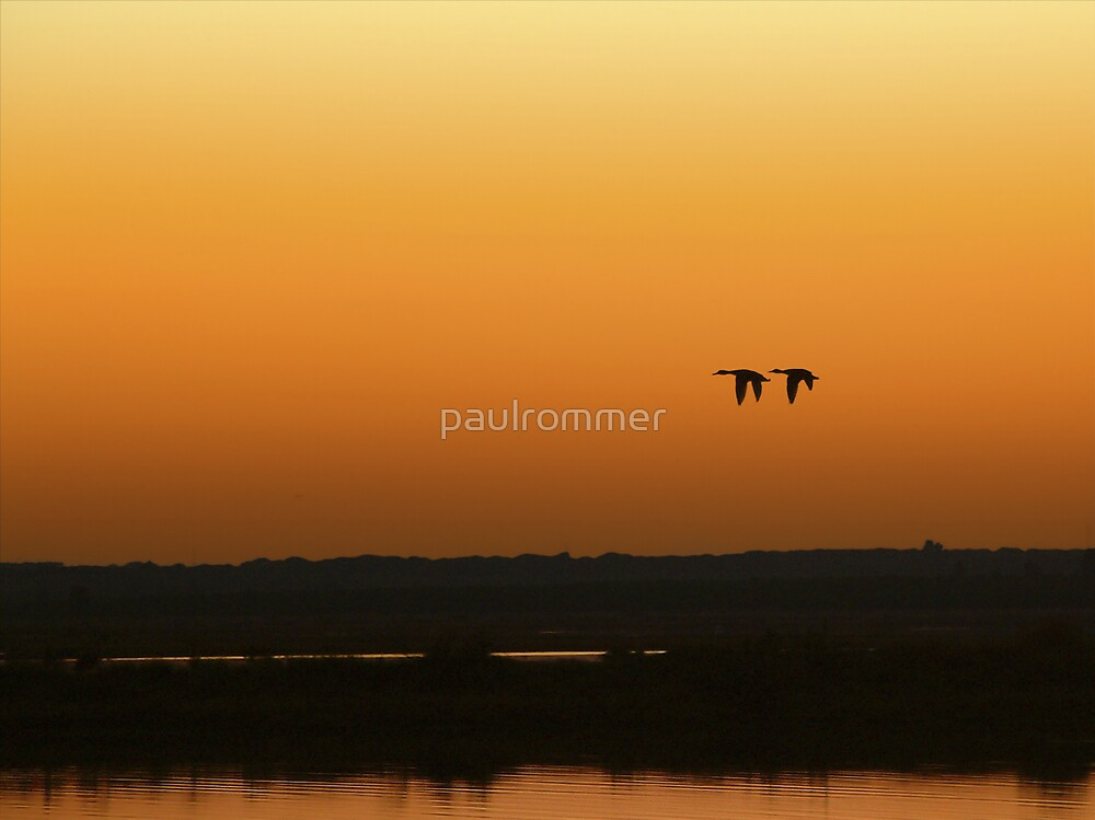 Ducks at the Marshes of Odiel River by paulrommer