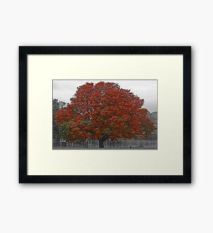 Chestnut Tree Framed Print