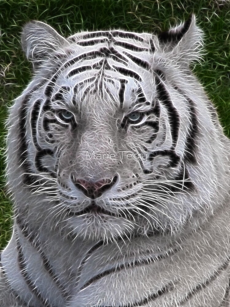 White Tiger by Marie Terry