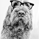 Brown Roan Italian Spinone Dog Head Shot with Glasses by heidiannemorris