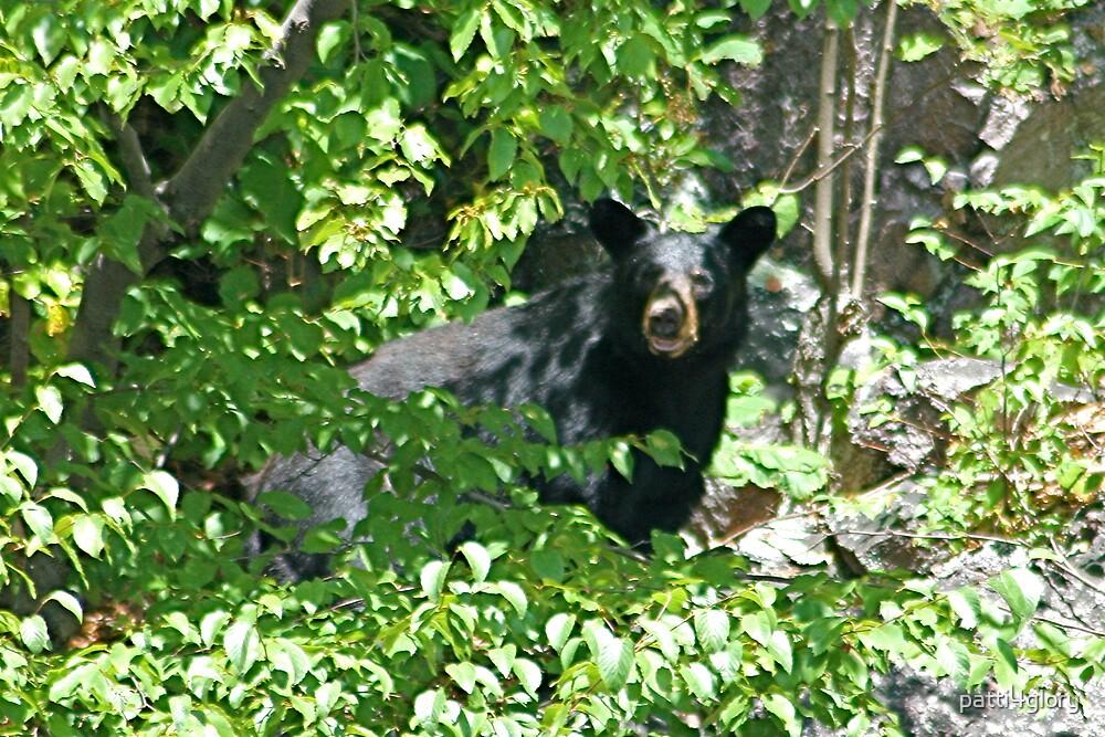 Woodland Visitor by patti4glory