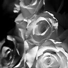 Weiße Rosen von Samantha Higgs
