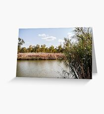 River with low water level among reeds and eucalyptus trees Greeting Card