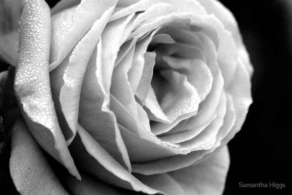 By The Light Of The Rose by Samantha Higgs