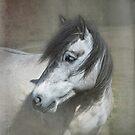 Highland pony by Mitch  McFarlane