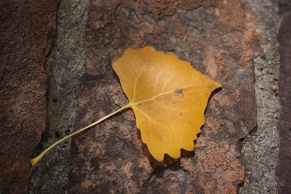 Golden Leaf by KDPhotos