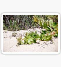 A vine growing on a sand dune wallpaper Sticker