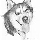 Husky dog by Mike Theuer