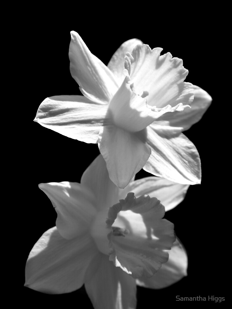 Daffodils in Black and White by purpleelephant