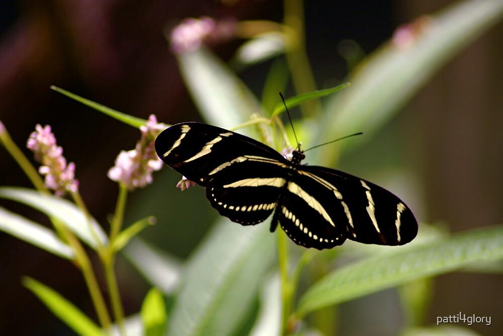 Zebra Longwing by patti4glory