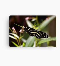 Zebra Longwing Canvas Print