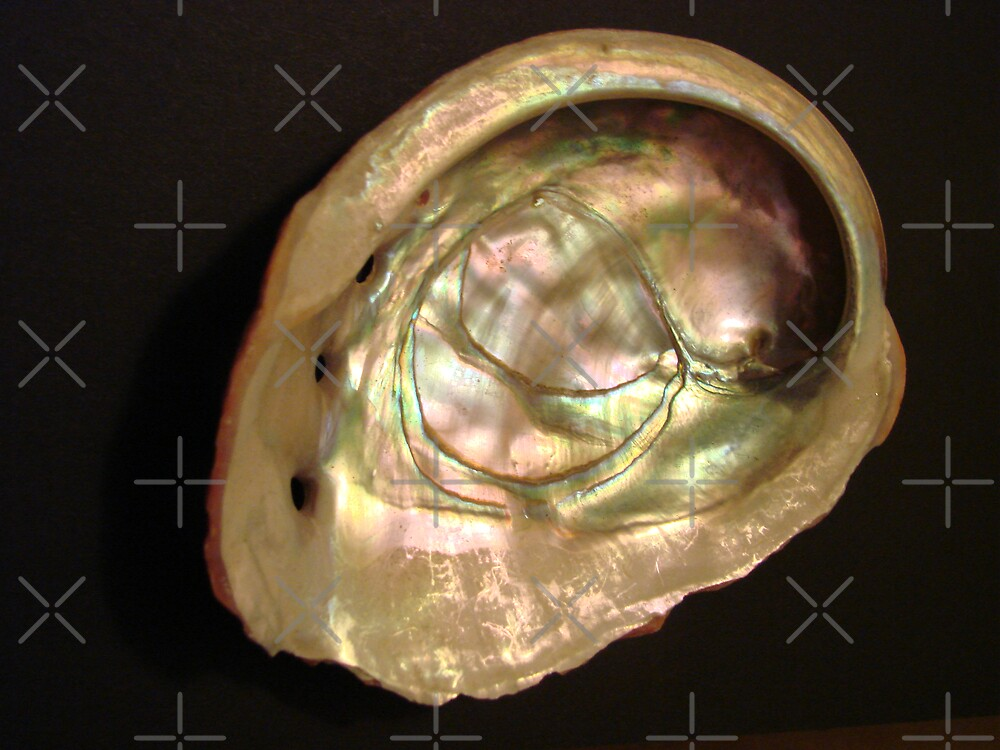 Abalone 2 by Kimberly Miller