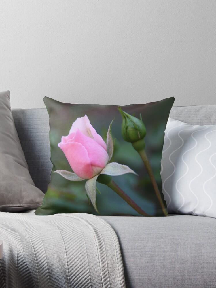 Rosebud by Kasey Cline