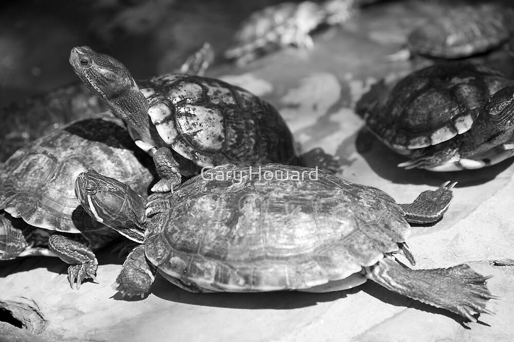 turtles by Gary Howard