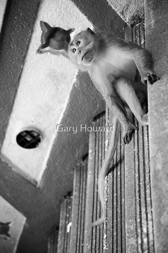 Malaysian Monkey by Gary Howard