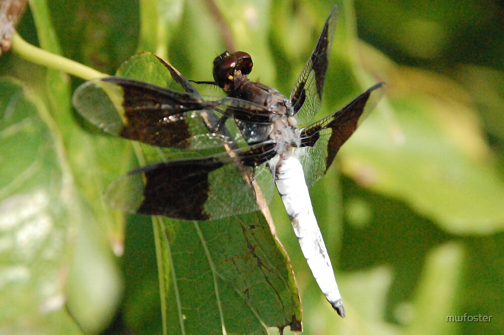 White Drangonfly 2 by mwfoster