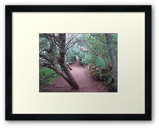 The Haunted Wood by Diane Petker