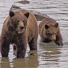 Grizzly Sow and Cub by Yukondick